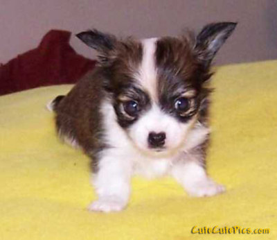 Baby Puppies on Cute Pictures Of Puppies  Kittens  Baby Animals      Funny Lolcats