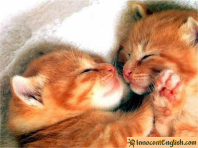 puppies and kittens sleeping. Cute and Funny Kittens