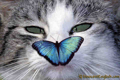 http://innocentenglish.com/daily-break/funny-pictures/funny-butterfly-cat-picture.jpg