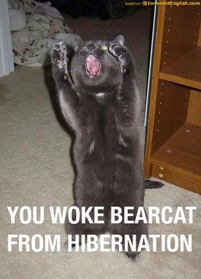 funny cat pics. Funny Cat Pictures With